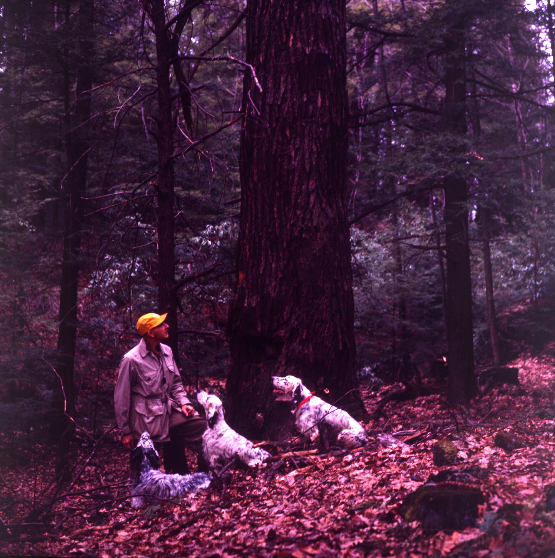 George Bird Evans and dogs in the forest, date unknown.
